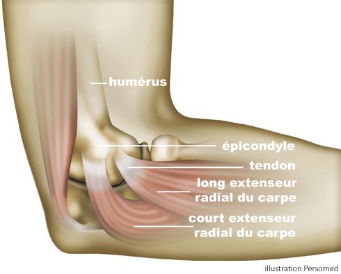 Anatomy of the Elbow - Clinique du sport Bordeaux - Mérignac